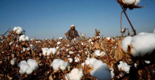 棉花發展協會BCI刪抵制疆棉聲明